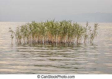 lake view and reeds