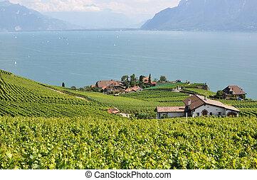 lake., vinhedos, genebra, contra, região, suíça, lavaux, ...