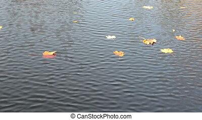 lake water tree leaves