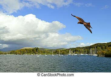 Lake Windermere in Cumbria Common buzzard in flight