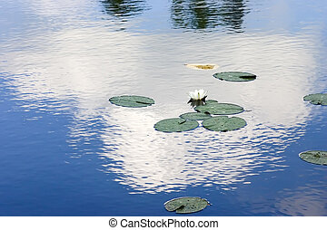 Lake with a lily