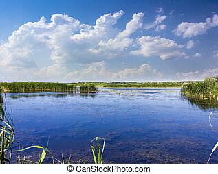 Lake with reeds and water lilies
