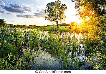 Lake with reeds in the setting sun