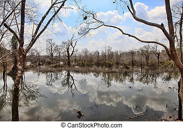 Lake with reflections of clouds. Cambodia