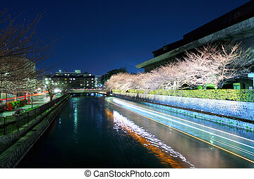 Lake with sakura cherry in kyoto at night