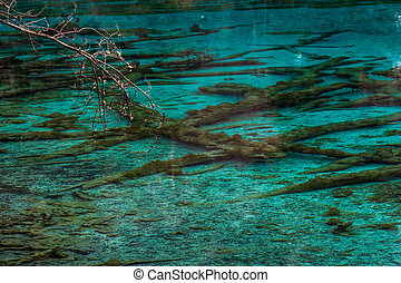Lake with underwater trees. Jiuzhaigou Valley, China