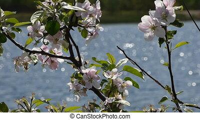Lake with wild rose