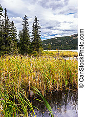 Lakes overgrown with marsh grass