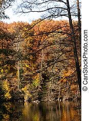 lakeshore, com, coloridos, folhagem baixa, refletir,...