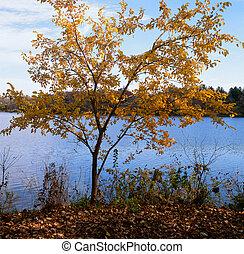 lakeshore, vue, -, minnesota