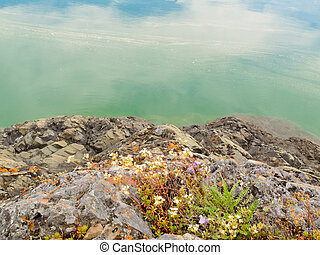 lakeshore, wildflowers, felsig, blühen