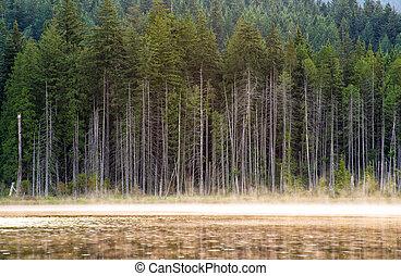 lakeside, arbres, à, brume