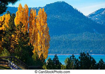 lakeside, arbres