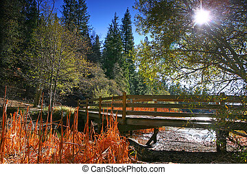 Lakeside Bridge Landscape