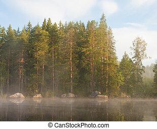 lakeside, brouillard, forêt, matin
