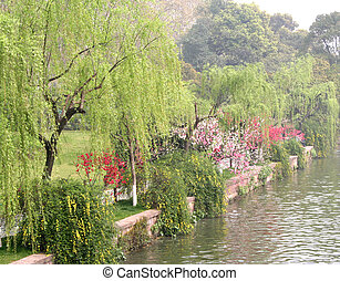 Lakeside in Spring - Lakeside of West Lake (Xihu) in...