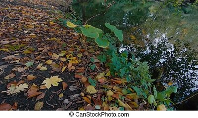 lakeside, multicoloured, automne, terrestre, feuilles,...