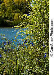 lakeside nature - green plants close-up with water in the...