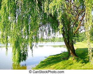 lakeside, saule