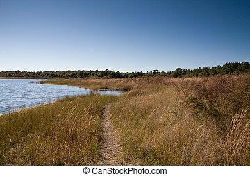 lakeside, sentier, herbe, par