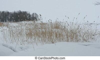 Lakeside winter landscape - Lakeside white winter landscape