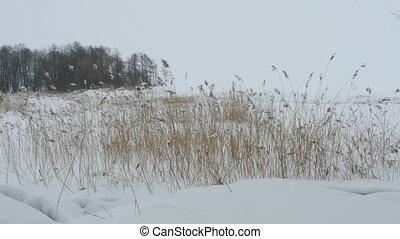 Lakeside winter landscape panorama - Lakeside white winter...