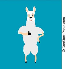 Lama Alpaca thumbs up and winks emoji. Animal happy emoji. Vector illustration