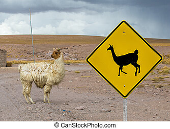 Lama crossing traffic sign, Altiplano, Bolivia