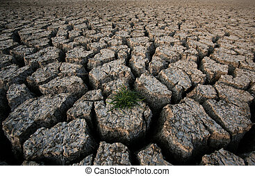 lama, planta, rachado, secado