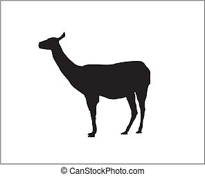 Lama - Vector - Silhouette