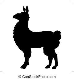 lama, zwierzę, od, ameryka południowa