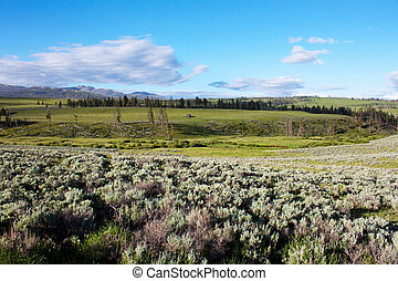 Lamar Valley in Yellowstone National Park, Wyoming