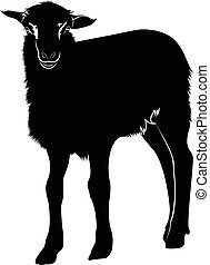 lamb. Farm animals lamb.
