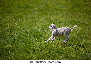 Lamb Jump