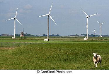 Lamb near wind farm - Eemshaven,Groningen, july 2016: Lamb...