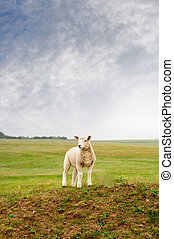 A young lamb standing on a hill, looking towarsd left frame. Cloudy sky, green fields and trees in background. Portrait (vertical) orientation.