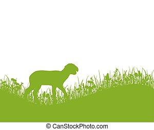 Lamb on meadow