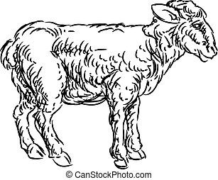 Lamb Sheep Food Grunge Style Hand Drawn Icon