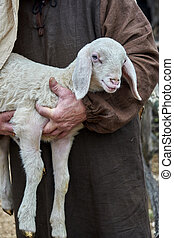 lamb with sheperd
