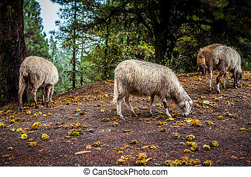 a group of lambs under chestnut tree