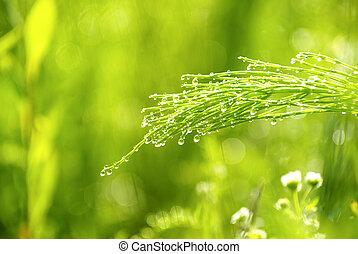lame, herbe