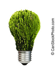 Lamp made of green plants. Ecology conception. Blue sky.
