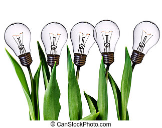 lampa, bulwa, tulipany