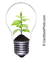 lampadina, con, pianta