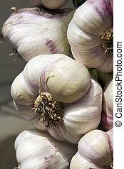 lampadine, aglio