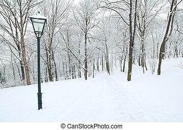 lampione, e, foresta, parco, coperto, in, profondo, neve