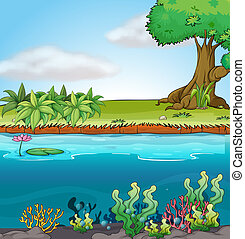 Land and aquatic environment - Illustration of land and...