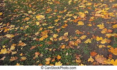 Land at autumn