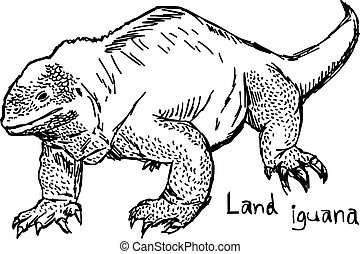 land iguana - vector illustration sketch hand drawn with black lines, isolated on white background