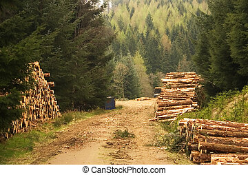 Land Management 2 - A forest clearing with a stack of felled...